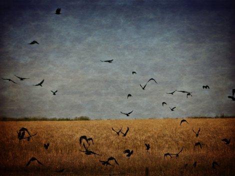 Photography by Grey Malkin